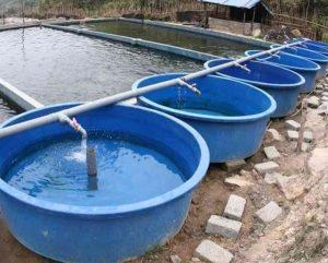 Bể nuôi thủy sản